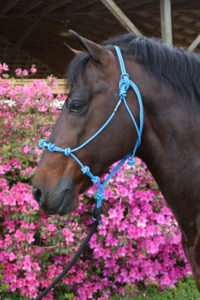 The last horsemanship halter you'll ever need